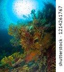 gorgonia in the mediterranean... | Shutterstock . vector #1214261767