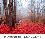 red autumn forest mist stairway ... | Shutterstock . vector #1214263747