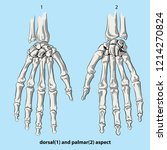 the bones of the hand | Shutterstock .eps vector #1214270824