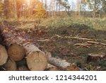 fighting beetle bark beetles ... | Shutterstock . vector #1214344201