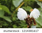 beautiful cone shaped white... | Shutterstock . vector #1214381617