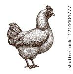 hen  chicken sketch. poultry... | Shutterstock .eps vector #1214404777