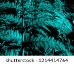 aqua leaves of fern in the night | Shutterstock . vector #1214414764