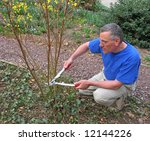 man pruning red twig dogwood... | Shutterstock . vector #12144226