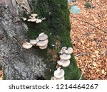 mushrooms can be eaten raw  can ... | Shutterstock . vector #1214464267