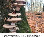 mushrooms can be eaten raw  can ... | Shutterstock . vector #1214464564