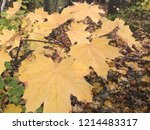 fall color change | Shutterstock . vector #1214483317