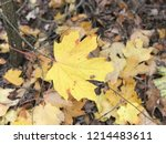 fall color change | Shutterstock . vector #1214483611