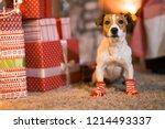 merry christmas. dog jack... | Shutterstock . vector #1214493337