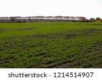 winter grain crops green field... | Shutterstock . vector #1214514907