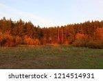 walkway through pine forest.... | Shutterstock . vector #1214514931