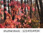 colorful foliage in the autumn... | Shutterstock . vector #1214514934