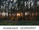 walkway through pine forest.... | Shutterstock . vector #1214514937