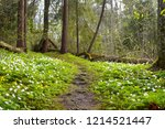 Forest Trail In Sunny Spring...