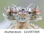 Big Eyes Of Dragonfly With Dew...