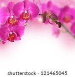 Stock photo orchid flowers border 121465045