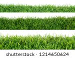 grass isolated on white... | Shutterstock . vector #1214650624
