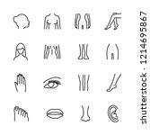 vector image set of female body ...   Shutterstock .eps vector #1214695867