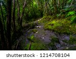 a greenery of nature in the... | Shutterstock . vector #1214708104
