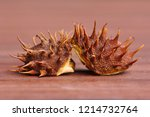 Ripe Horse Chestnuts In Fall