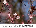 fruits blossom in spring  april | Shutterstock . vector #1214777101