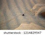 black beetles  darkling beetles ... | Shutterstock . vector #1214829547