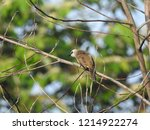the bulbuls are a family ... | Shutterstock . vector #1214922274
