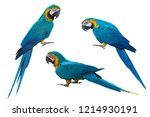 Blue And Gold Macaw Isolated O...
