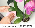 woman taking care of orchid... | Shutterstock . vector #1215092971