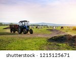 tractor and cows on the farm....   Shutterstock . vector #1215125671