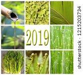 2019  green vegetation collage   Shutterstock . vector #1215203734