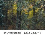 autumn landscape in the forest | Shutterstock . vector #1215253747