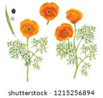 Ralistic Botanic Watercolor...