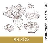 sugar beet. root  leaves  sugar ... | Shutterstock .eps vector #1215283231