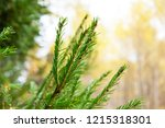 branch ate in the autumn forest ...   Shutterstock . vector #1215318301
