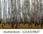 wild natural forest of old... | Shutterstock . vector #1215319837