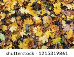 colorful backround image of... | Shutterstock . vector #1215319861