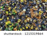 colorful backround image of... | Shutterstock . vector #1215319864