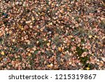 colorful backround image of... | Shutterstock . vector #1215319867