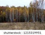 wild natural forest of old... | Shutterstock . vector #1215319951