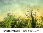 vintage bare tree in sepia and... | Shutterstock . vector #1215428674