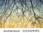 vintage bare tree in sepia and... | Shutterstock . vector #1215429391