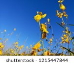 cloud nature flower background   Shutterstock . vector #1215447844