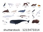 collection of cute polar... | Shutterstock .eps vector #1215473314