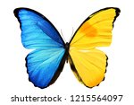 Stock photo butterfly with blue yellow wings isolated on white background 1215564097