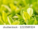 green nature from beautiful... | Shutterstock . vector #1215589324