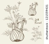 dill and   or fennel  hand... | Shutterstock .eps vector #121559431