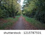leaves of ground next to park...   Shutterstock . vector #1215787531