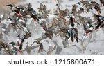 flock of wild ducks flying over ... | Shutterstock . vector #1215800671