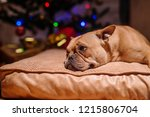 close up of puppy lying down on ... | Shutterstock . vector #1215806704